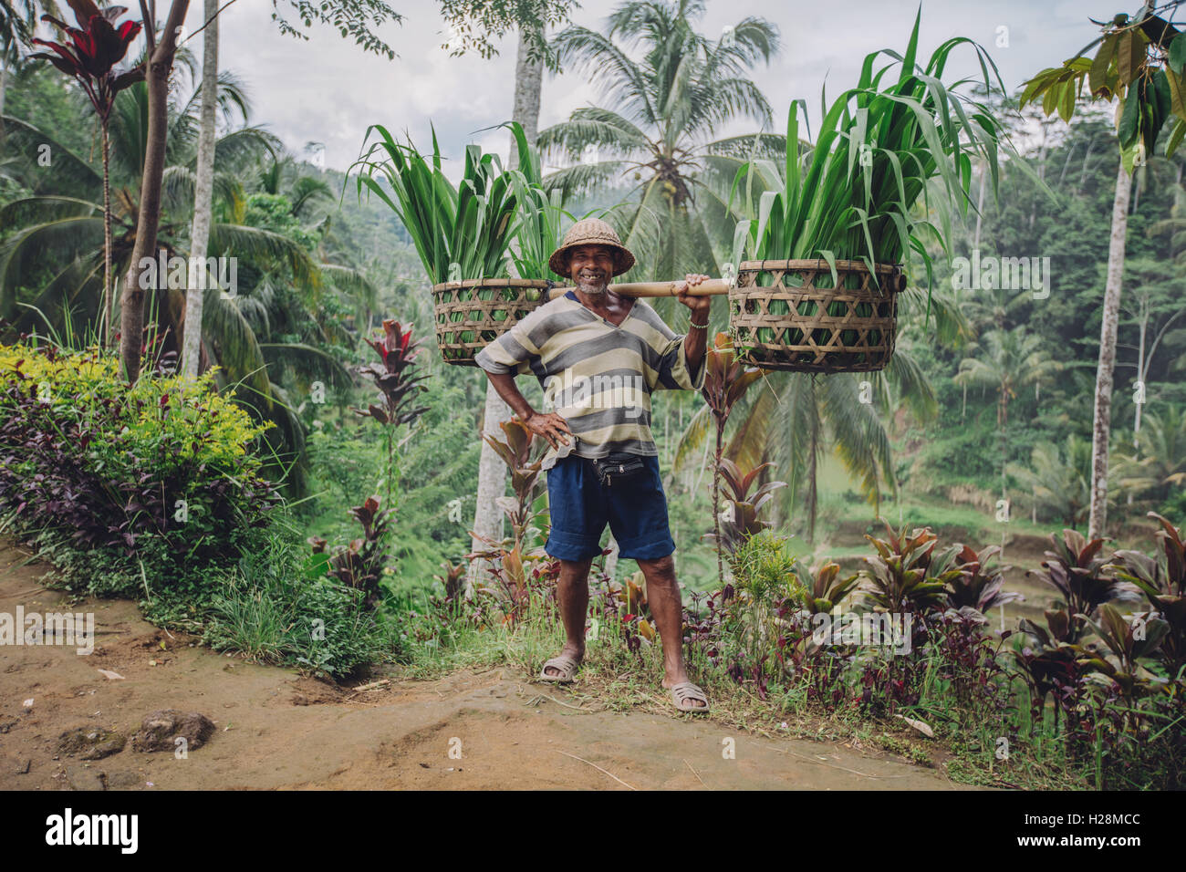 Full length shot of confident old man carrying seedlings on his shoulders. Senior male farmer smiling and posing - Stock Image