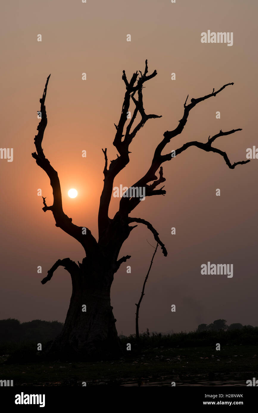 A dead tree near the U Bein Bridge in Amarapura, Myanmar. - Stock Image