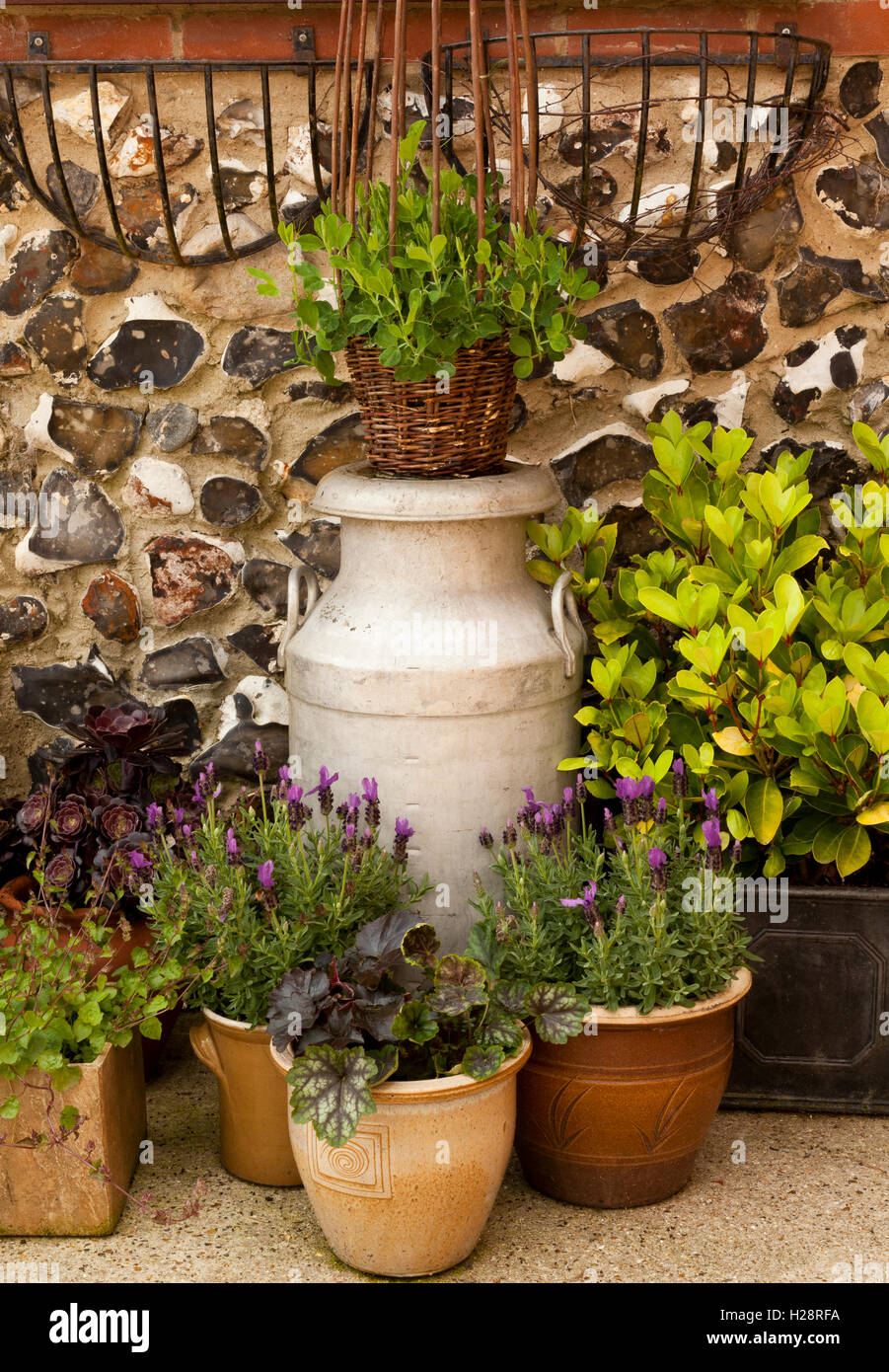 Flower Pots and an old milk churn displaying flowering plants Stock Photo