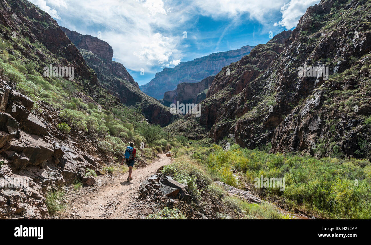 Hiker on the Bright Angles Trail, Grand Canyon National Park, Arizona, USA - Stock Image