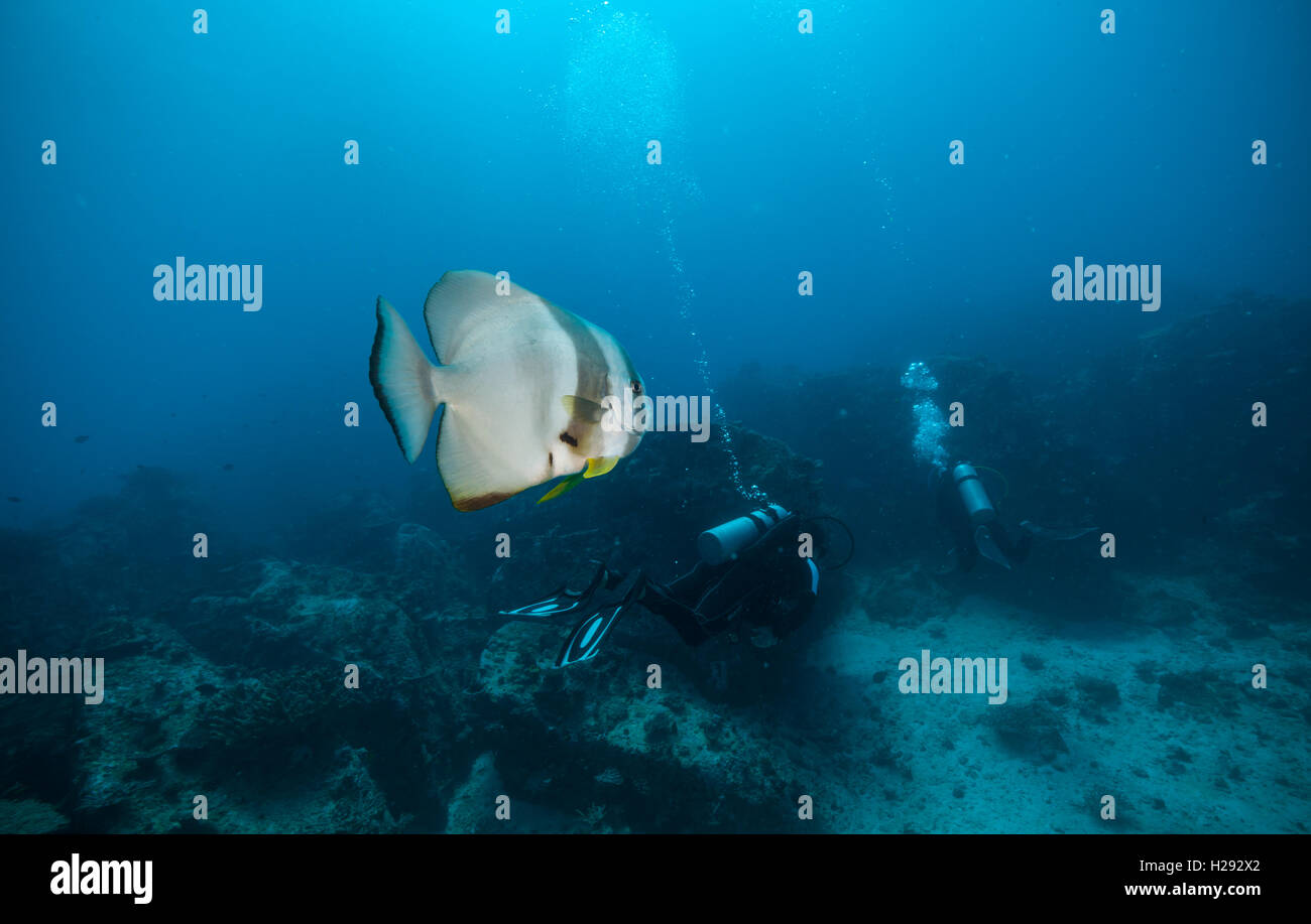 Group of scuba divers exploring sea bottom with big flat fish on foreground. Underwater life with beautiful rocks - Stock Image