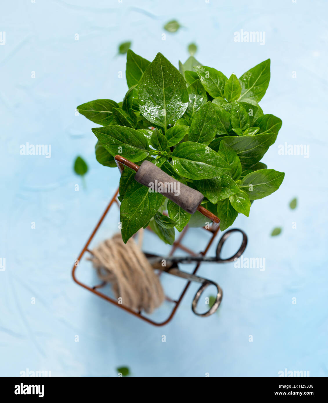 Heap of fresh basil shot from above - Stock Image