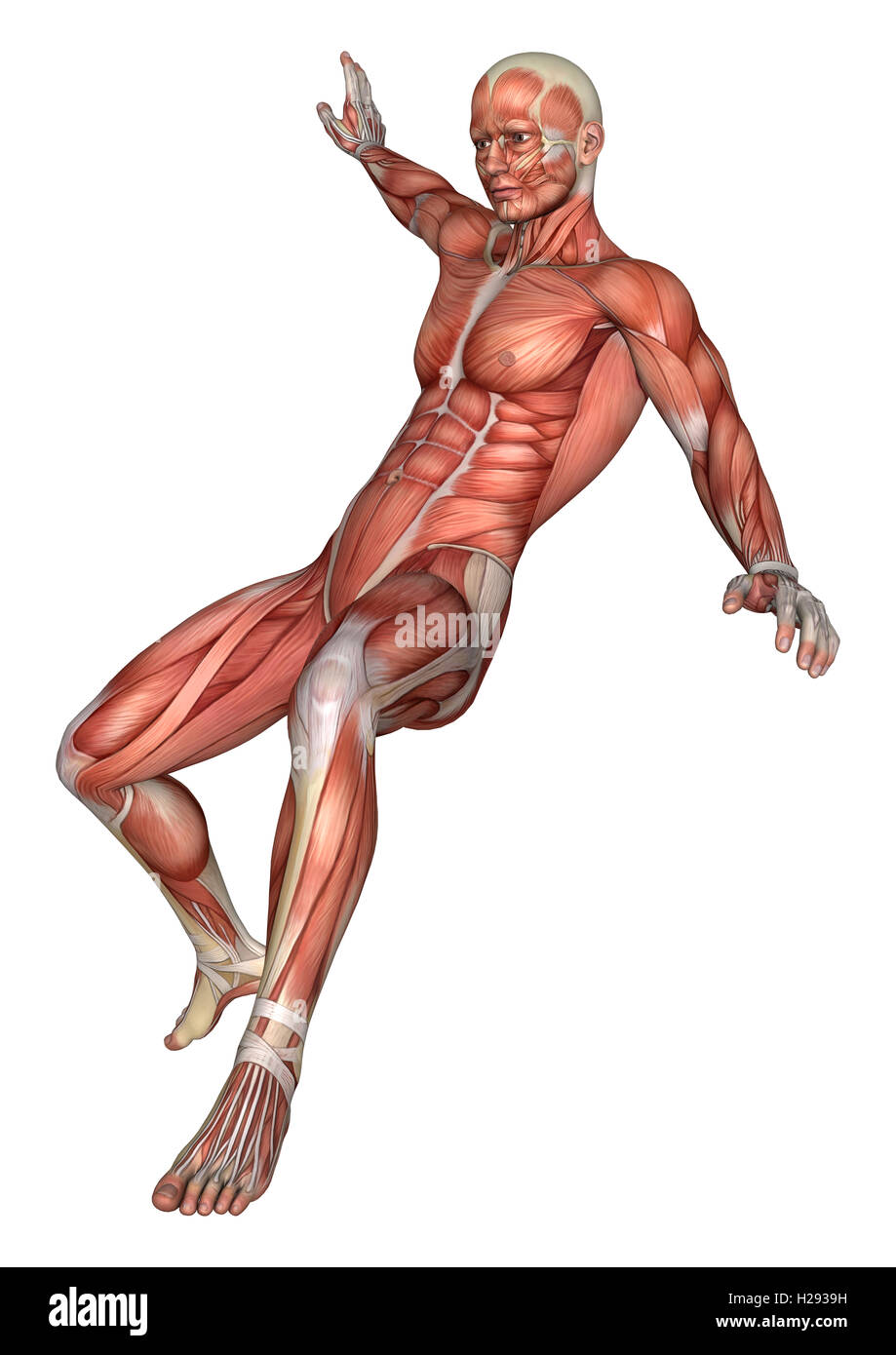 3d3d Rendering Of A Male Anatomy Figure With Muscles Map Jumping