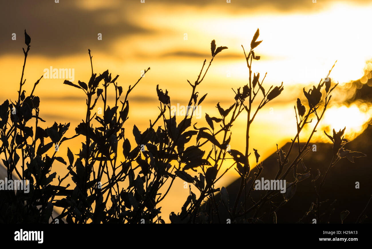 Sky at sunset seen through tops of trees. - Stock Image