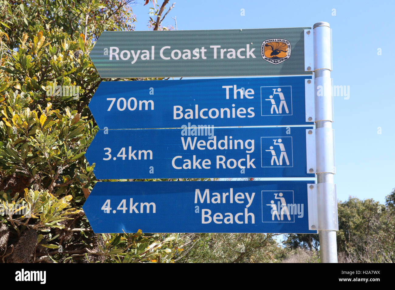 the royal coast track leading to the balconies wedding cake rock