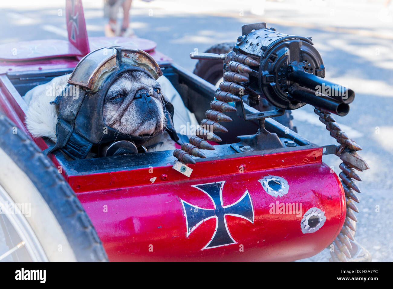 Multi-media artist Mad Dog's  punk bicycle  sidecar with machine gun and helmeted dog, Vancouver, British Columbia, - Stock Image