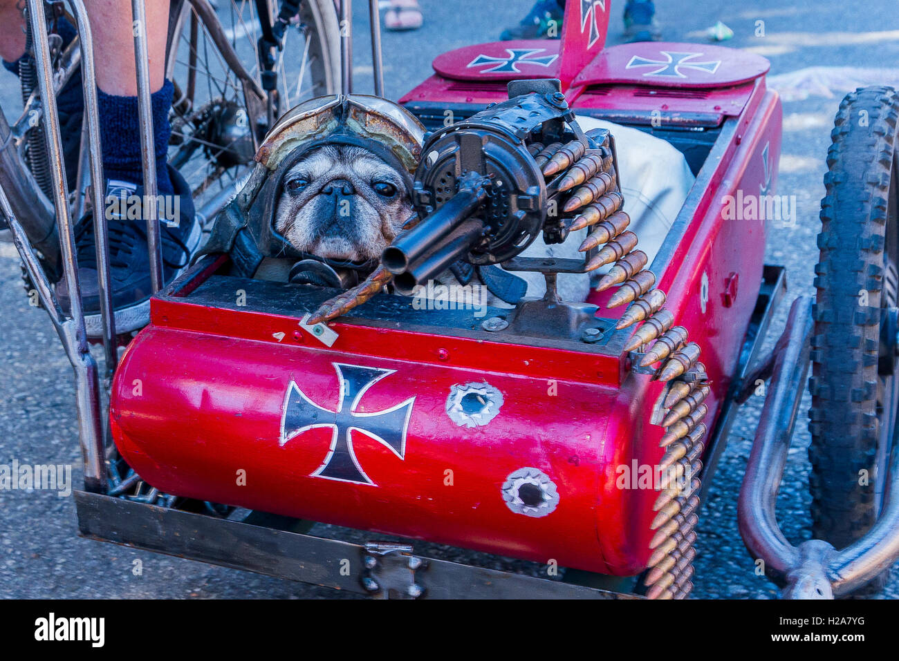Multi-media artist Mad Dog's  punk bicycle  sidecar with machine gun and helmetted dog, Vancouver, British Columbia, - Stock Image
