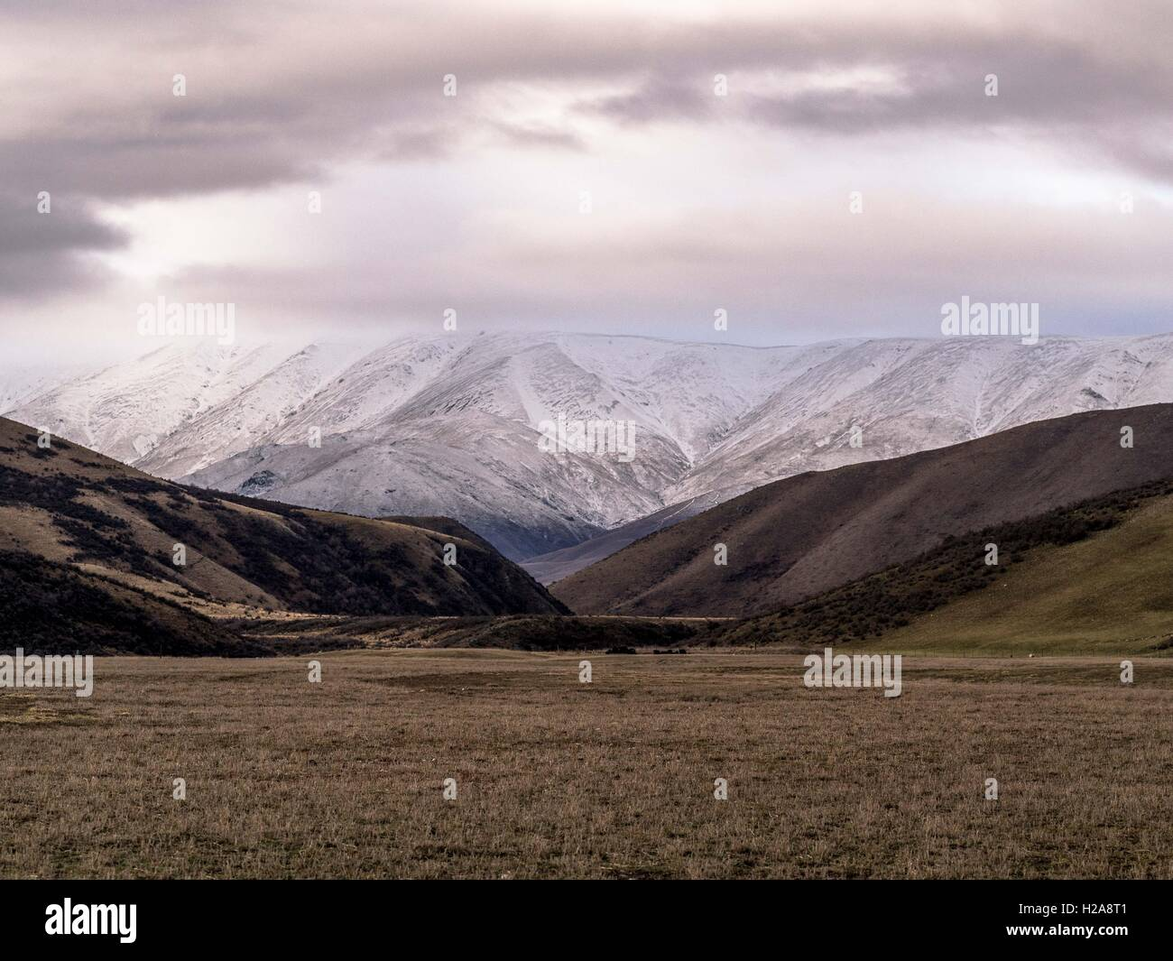 central otago landscape  Hawkdun Range shades of brown and cream  rolling folds level stubble  Maniototo south island - Stock Image