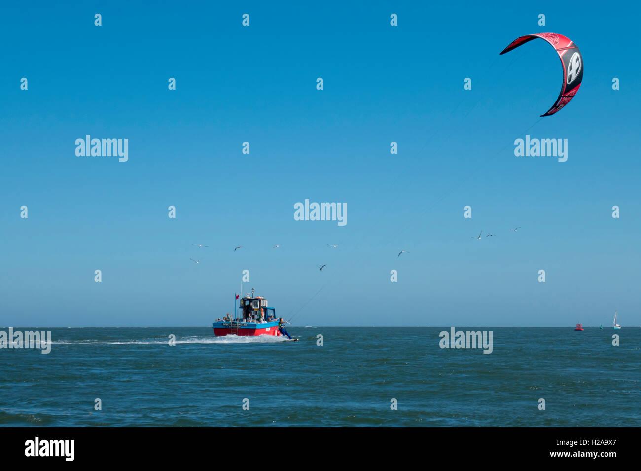 europe, uk, england, devon, Exe estuary dolphin watching - Stock Image