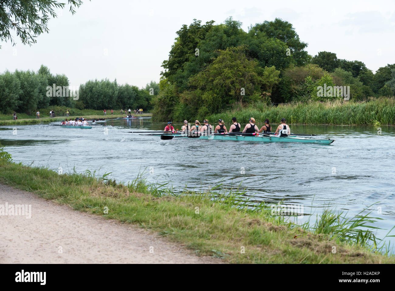 Fine sweep boats coxed eights taking part in Cambridge Bumps on river cam Cambridge Cambridgeshire England 2016 - Stock Image