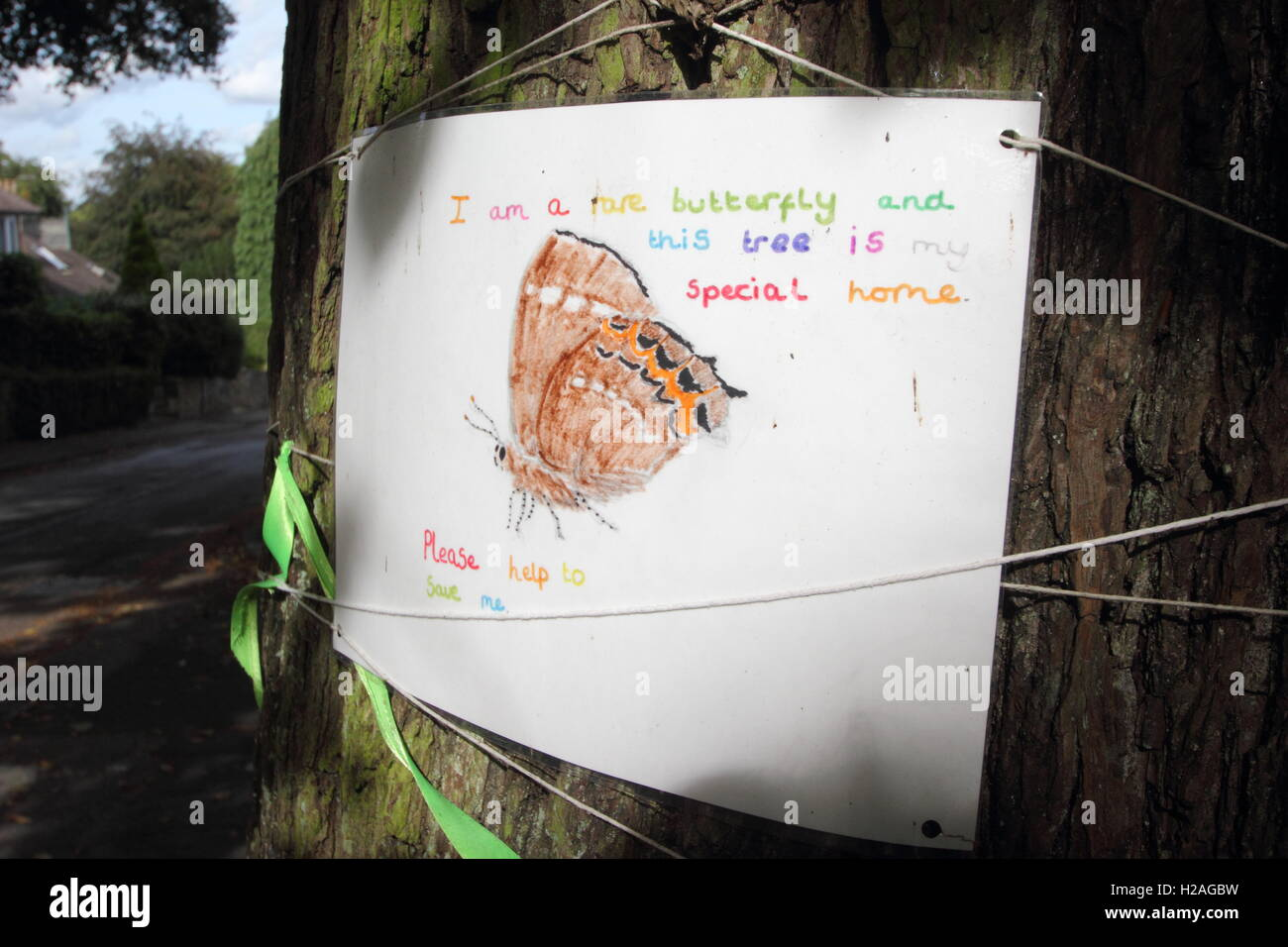 A poster on the trunk of a mature elm tree in Nether Edge, Sheffield alerts passers-by that the tree hosts rare - Stock Image