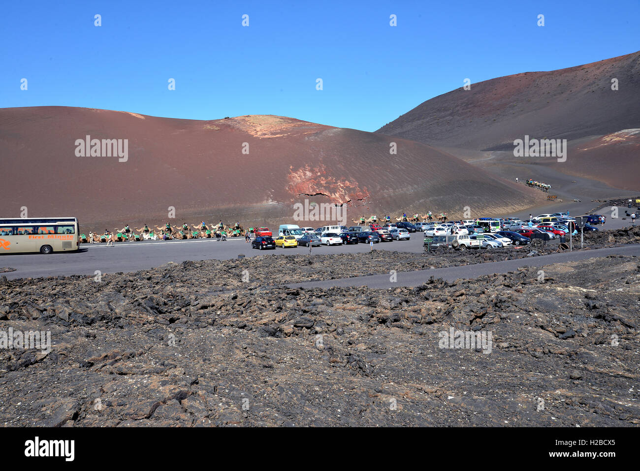 Camel Safari in Lanzarote Canary Islands.View of the tourists, camels volcanic landscape cars in car park - Stock Image