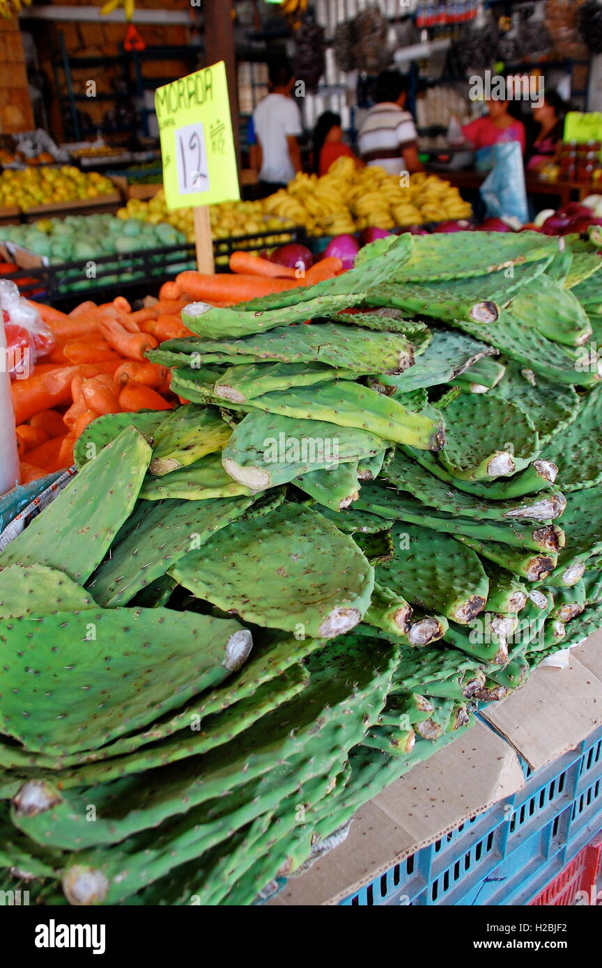 Edible cactus for sale in market in Mexico - Stock Image
