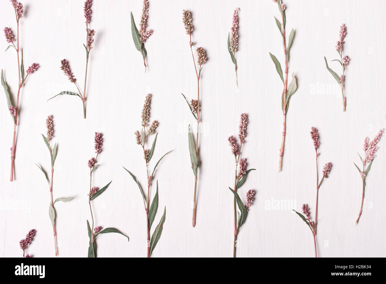 Pink flower pattern.Flat lay, top view.Nature concept. - Stock Image