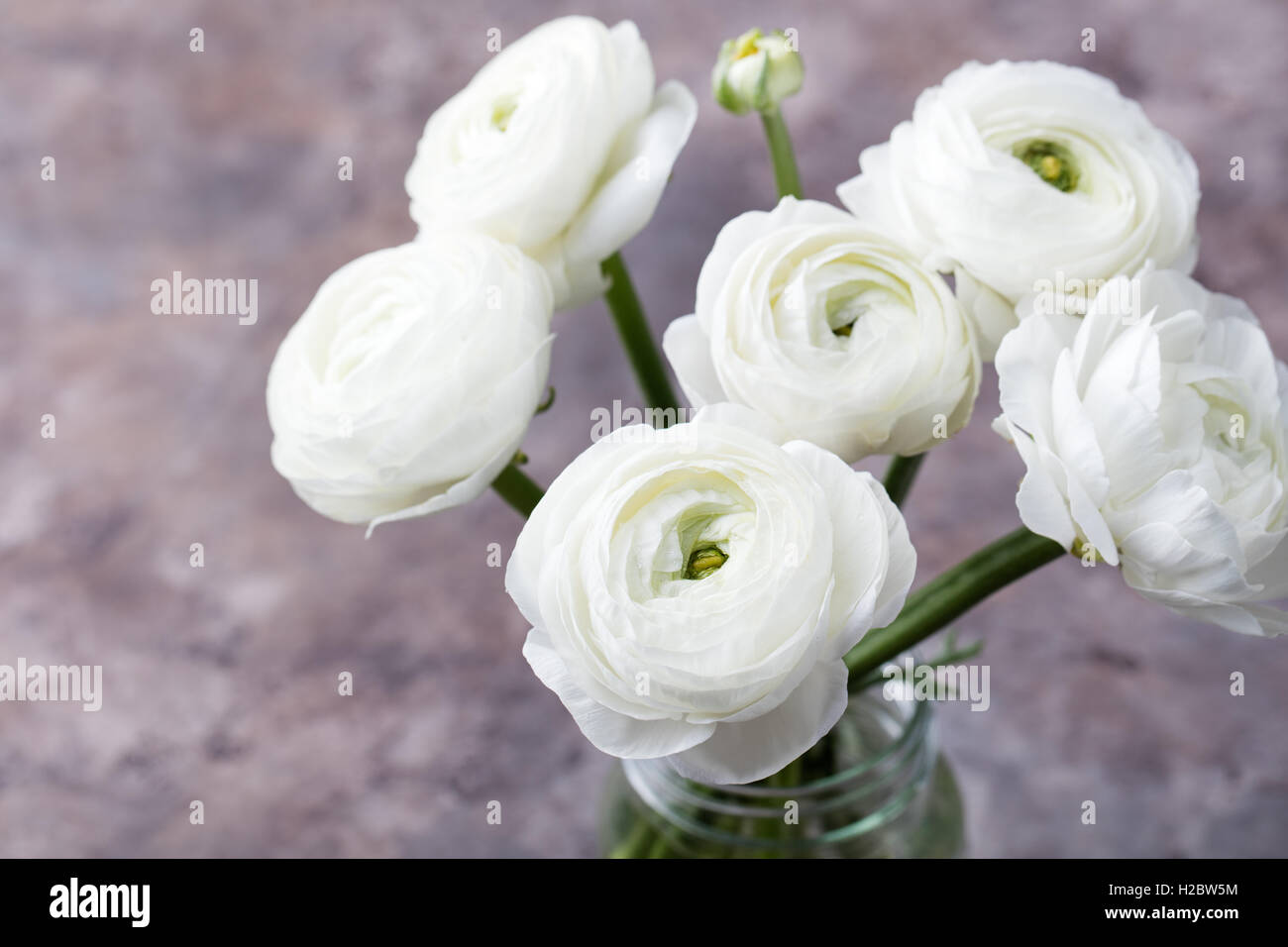 White ranunculus flowers in a glass vase grey background copy space white ranunculus flowers in a glass vase grey background copy space mightylinksfo