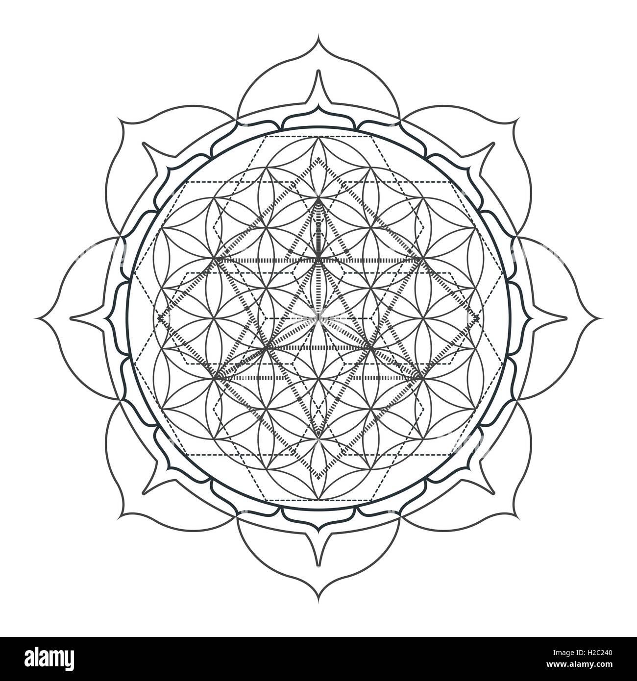 vector contour monochrome design mandala sacred geometry