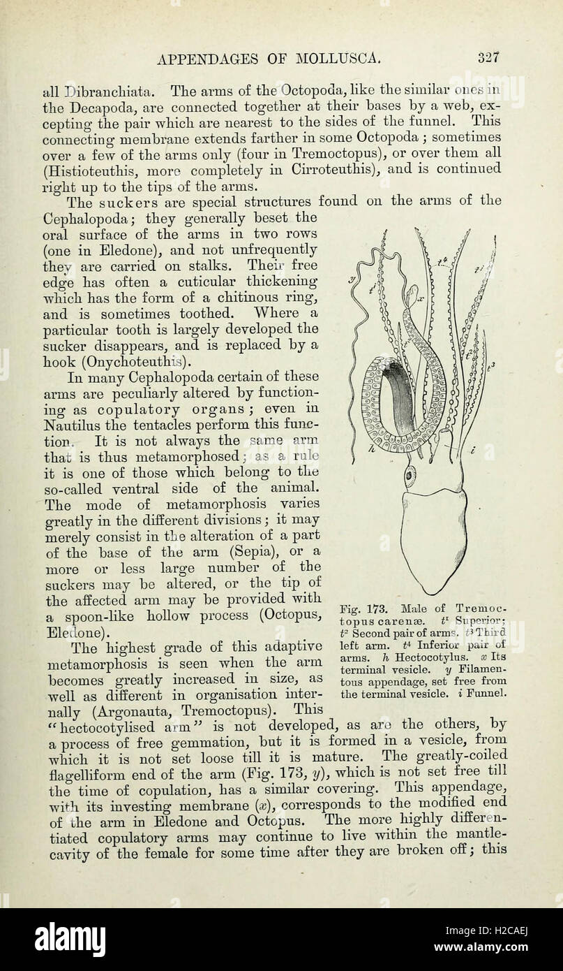 Elements of Comparative Anatomy (Page 327 Stock Photo: 121973562 - Alamy