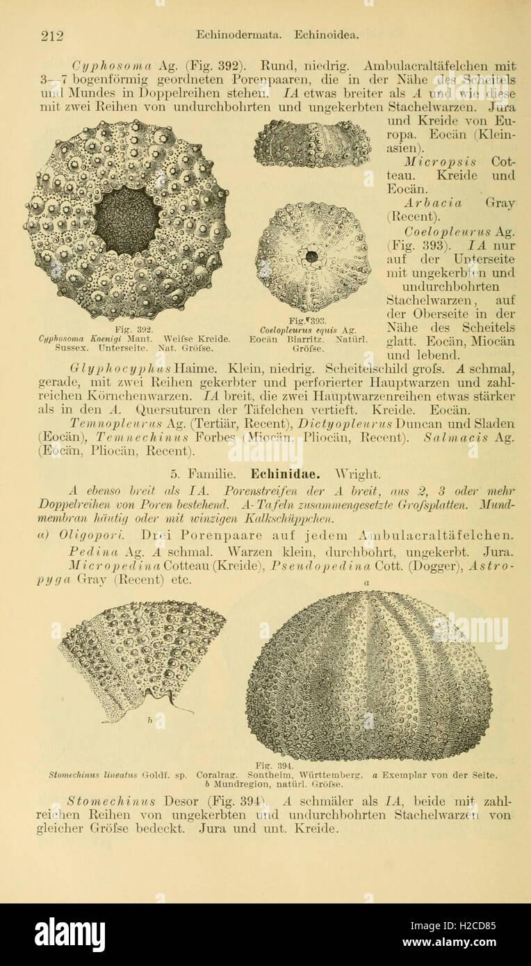 Grundzüge der Paläontologie (Page 212) - Stock Image
