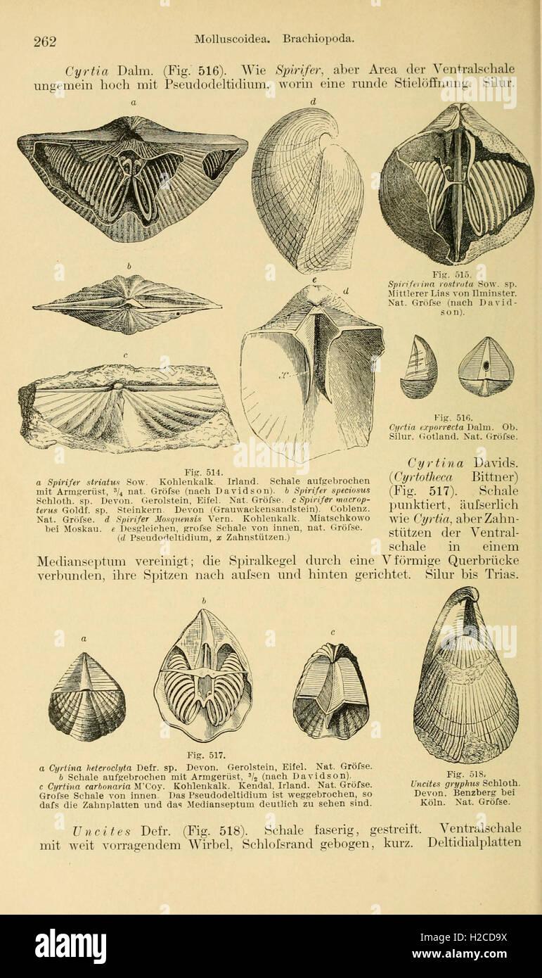 Grundzüge der Paläontologie (Page 262) - Stock Image