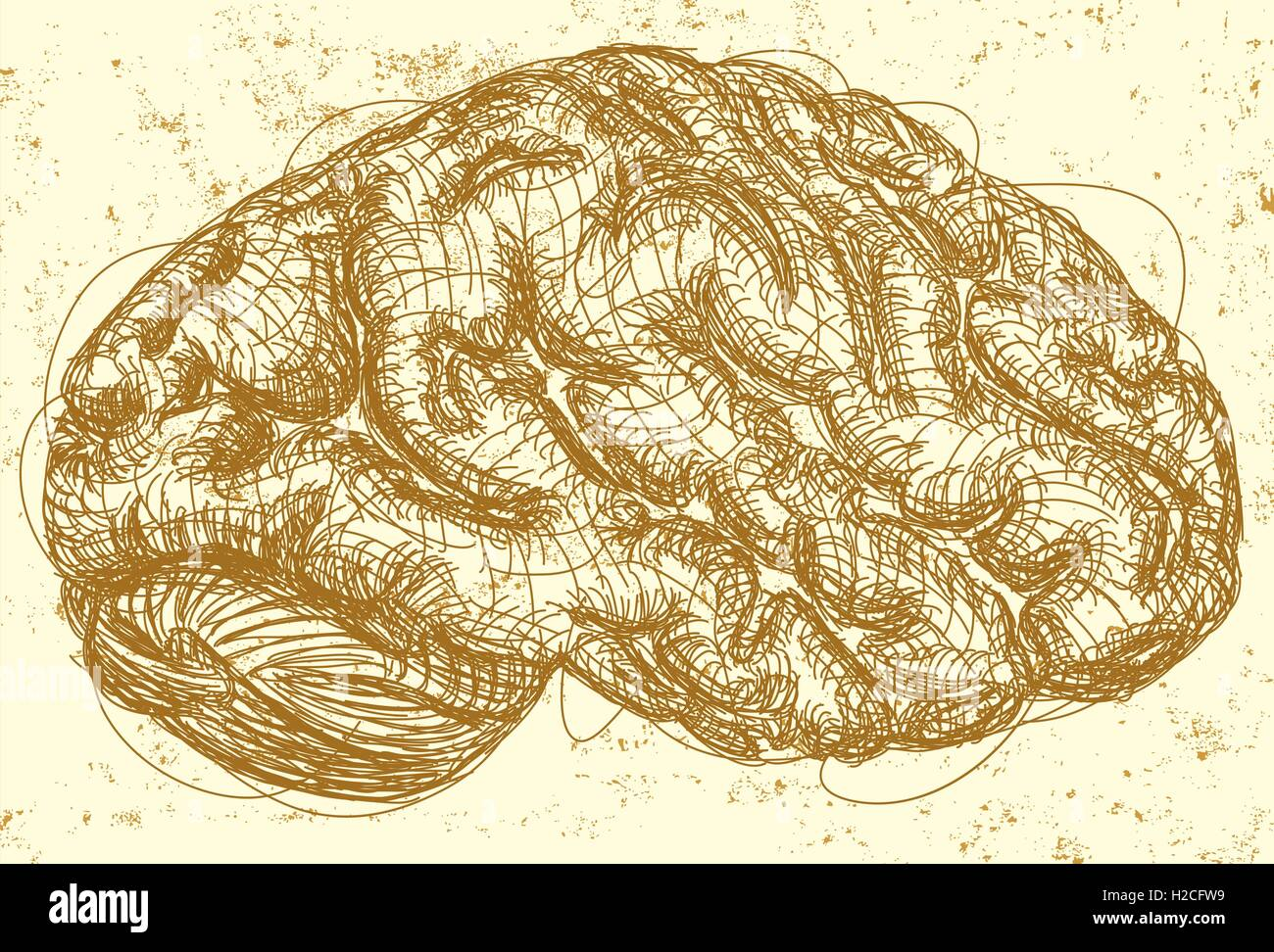 Brain  A sketch of the side view of a brain over an abstract background. - Stock Image