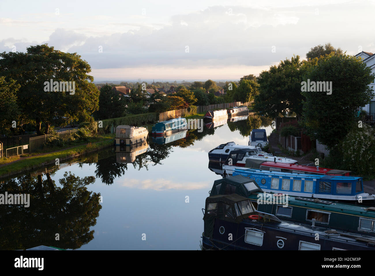 Early summer's morning on the Bridgewater Canal, Appleton, Cheshire - Stock Image
