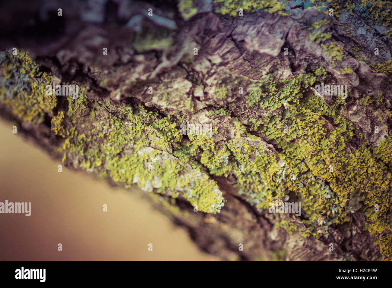Moss on Tree Trunk - Stock Image