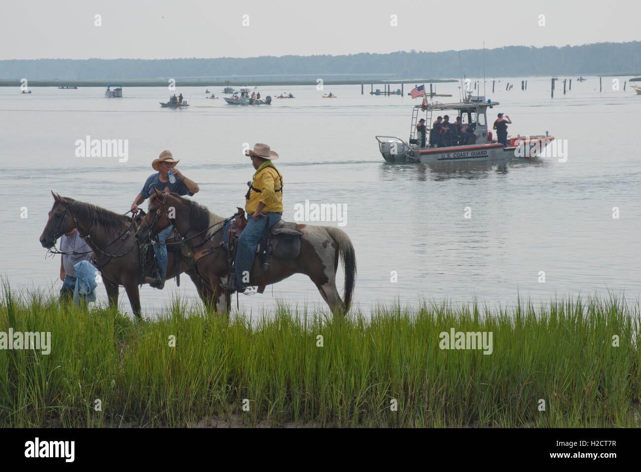 Saltwater Cowboys and their horses take a break from penning and rounding the wild ponies as they arrive on the - Stock Image