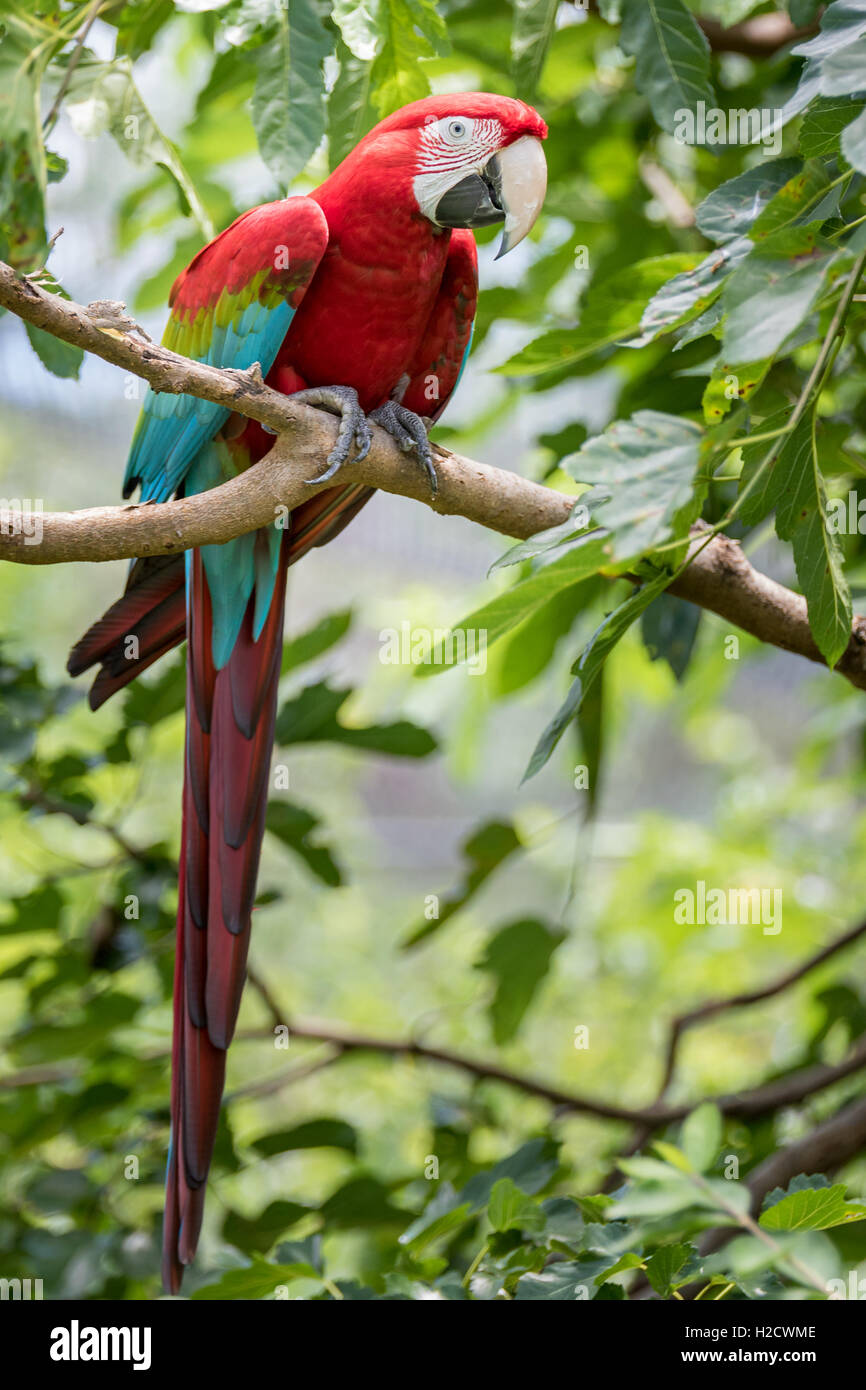 parrot in a tree stock photo 121985486 alamy
