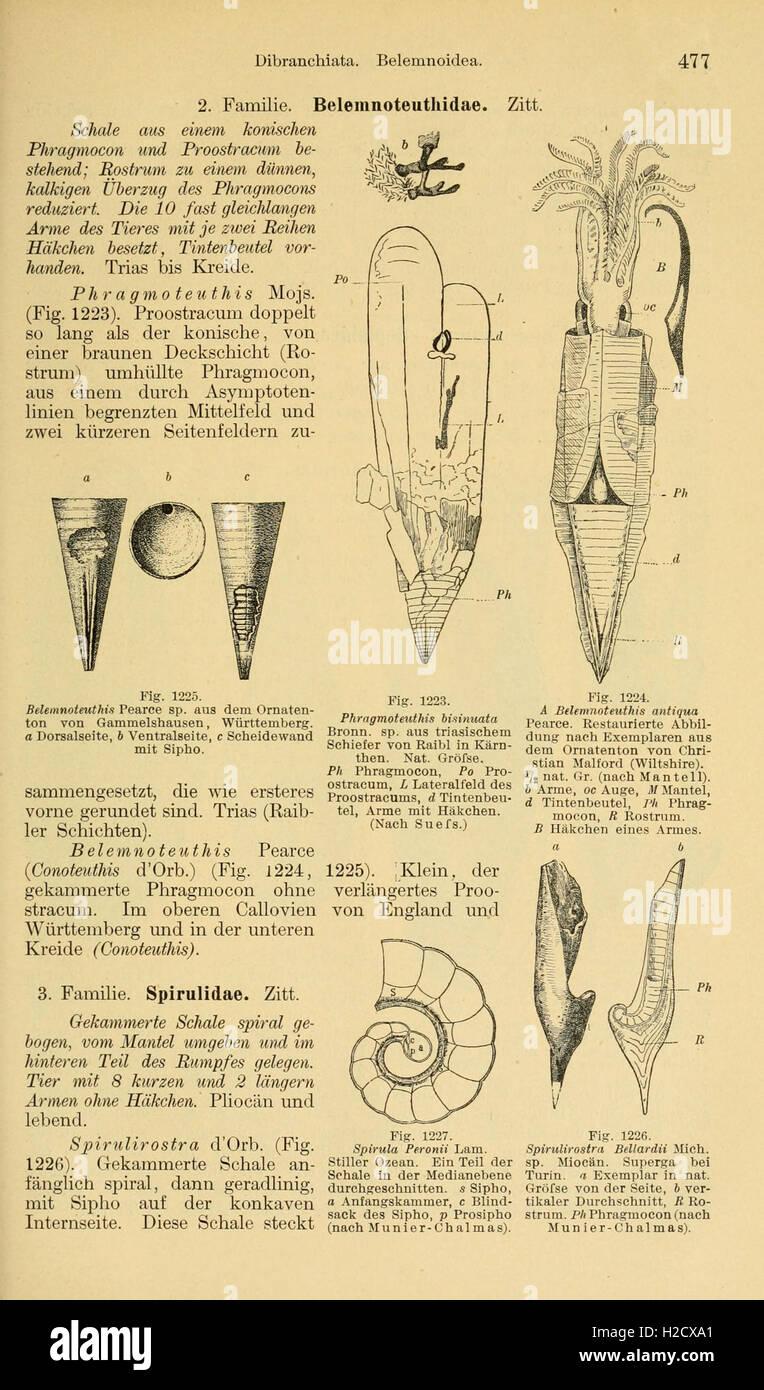 Grundzüge der Paläontologie (Page 477) - Stock Image