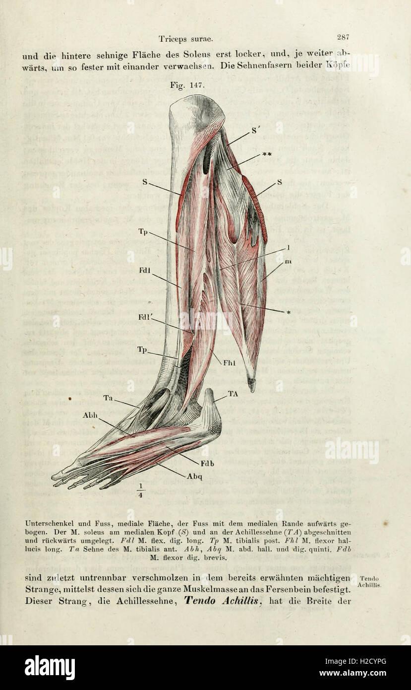 Nett Systematische Anatomie Definition Fotos - Anatomie Von ...