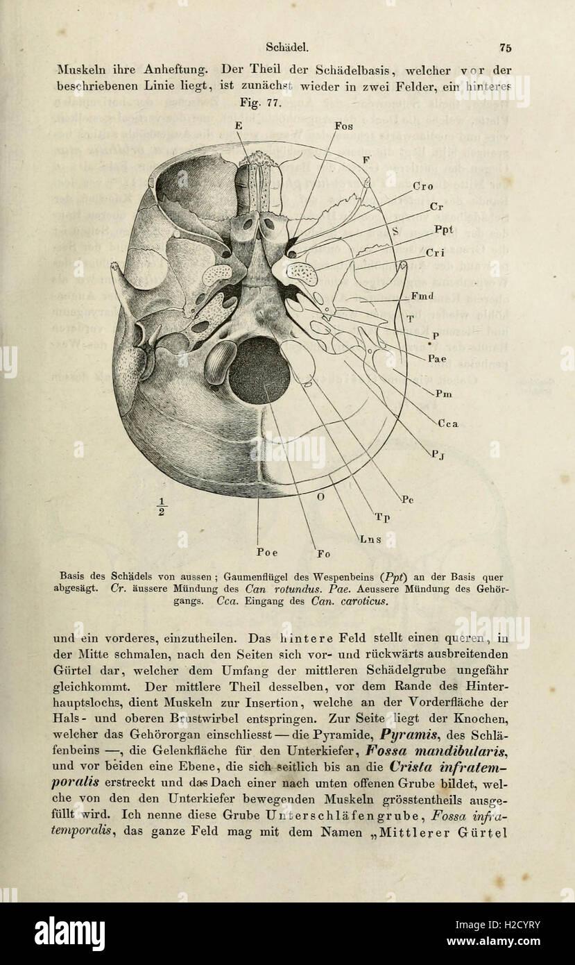 Ungewöhnlich Was Ist Die Systematische Anatomie Zeitgenössisch ...