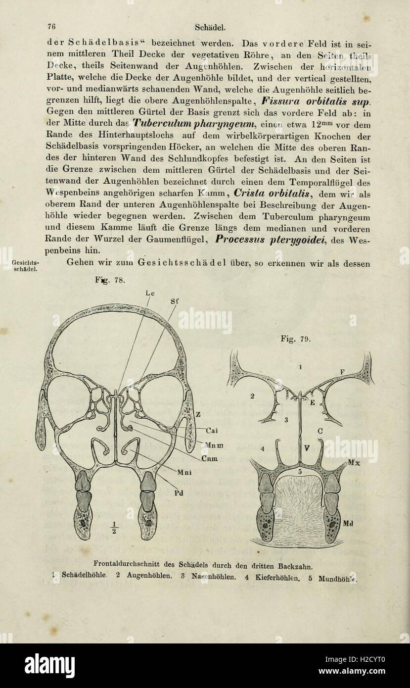 Fantastisch Schwein Mund Anatomie Galerie - Anatomie Von ...