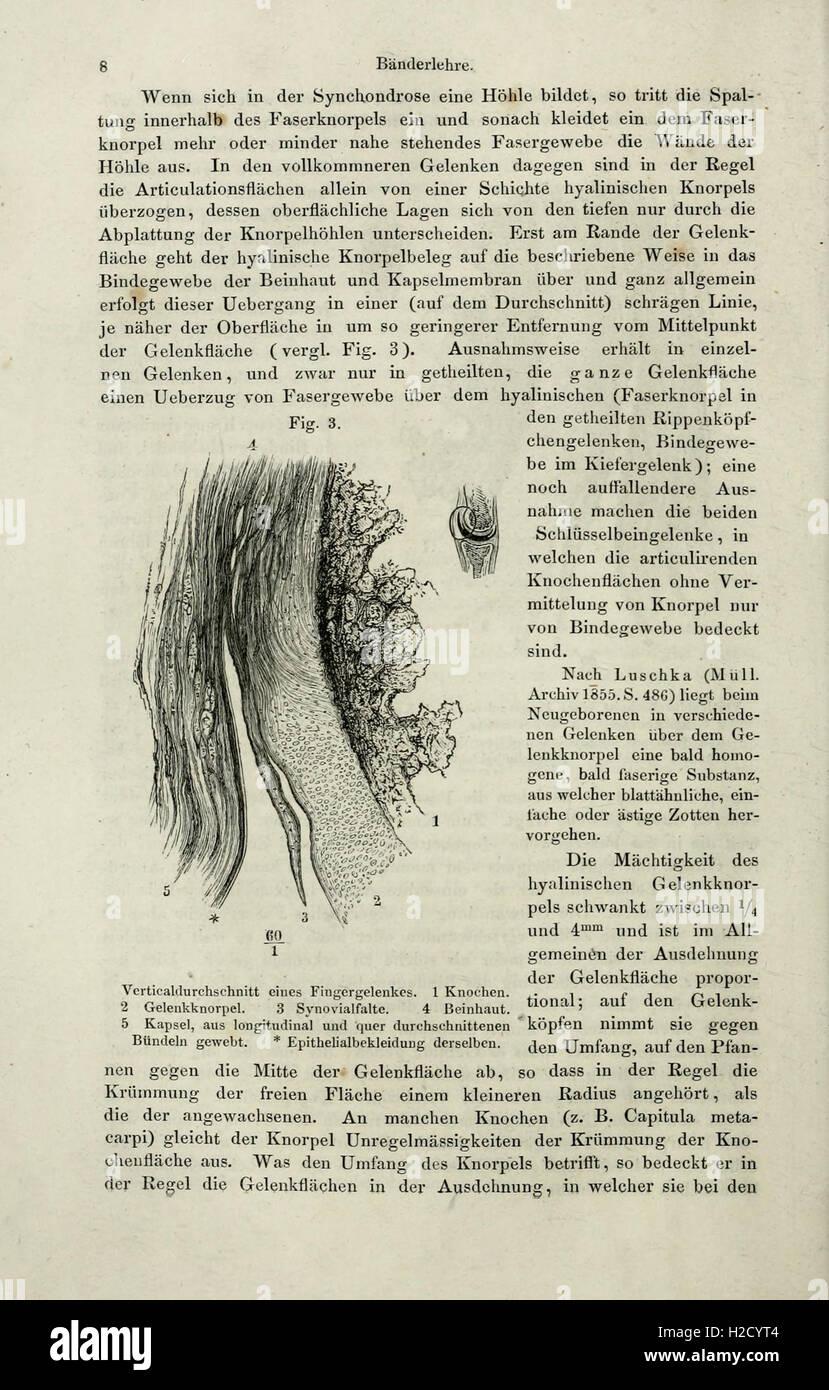 Fein Systematische Anatomie Definition Zeitgenössisch - Anatomie ...