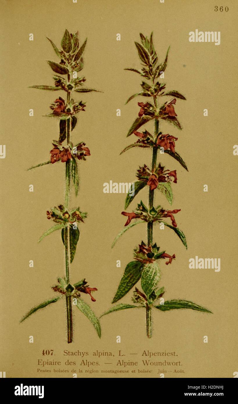 Atlas de la flora alpine (Page 13) Stock Photo