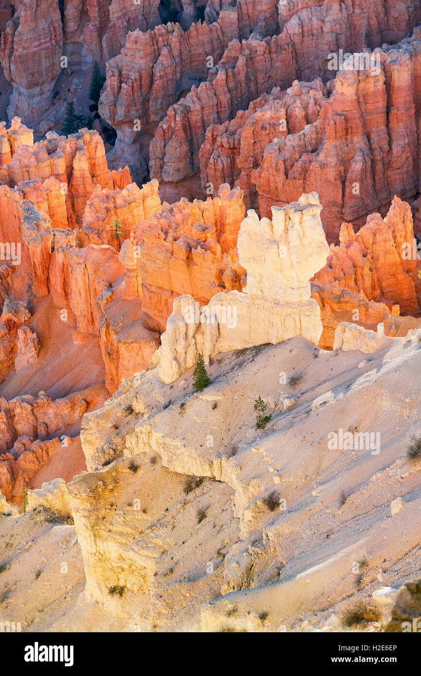 Sandstone formations, rock needles, Bryce Canyon National Park, Utah, U.S. - Stock Image