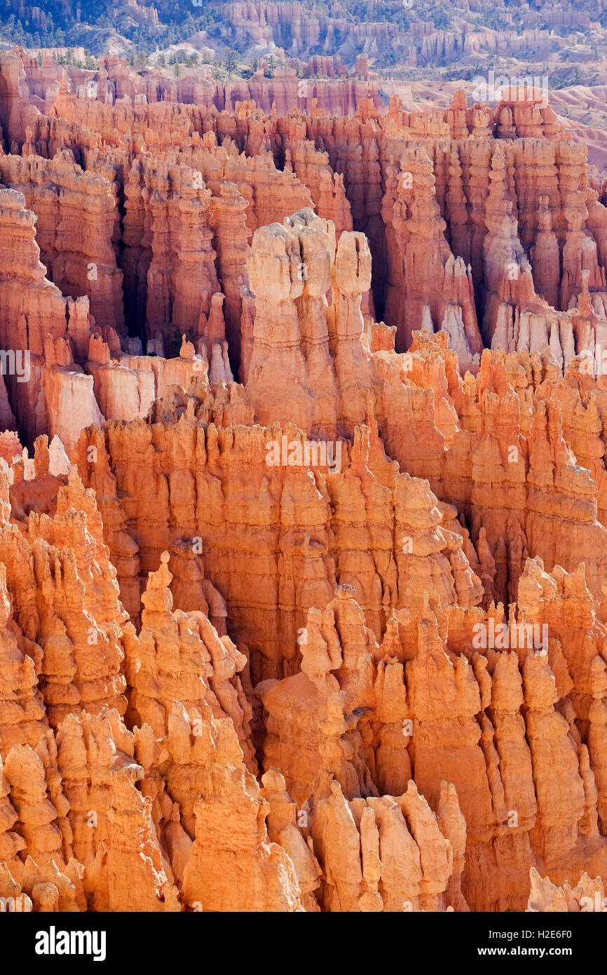 Sandstone formations, rock needles, Bryce Canyon, Bryce Canyon National Park, Utah, U.S. - Stock Image