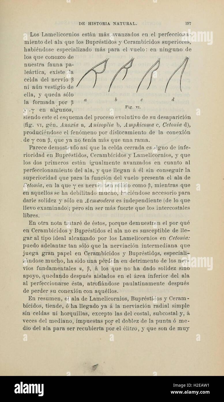 Boletín de la Sociedad Española de Historia Natural (Page 197) Stock Photo