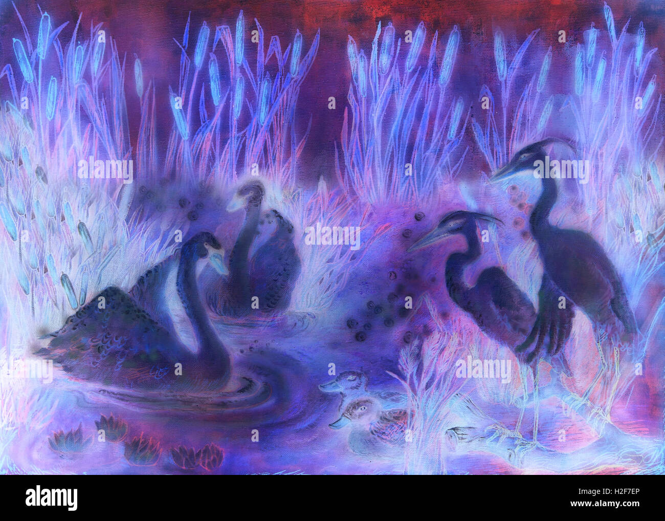 decorative illustration in violet and lila tones of birds swimming on pond with reeds - Stock Image