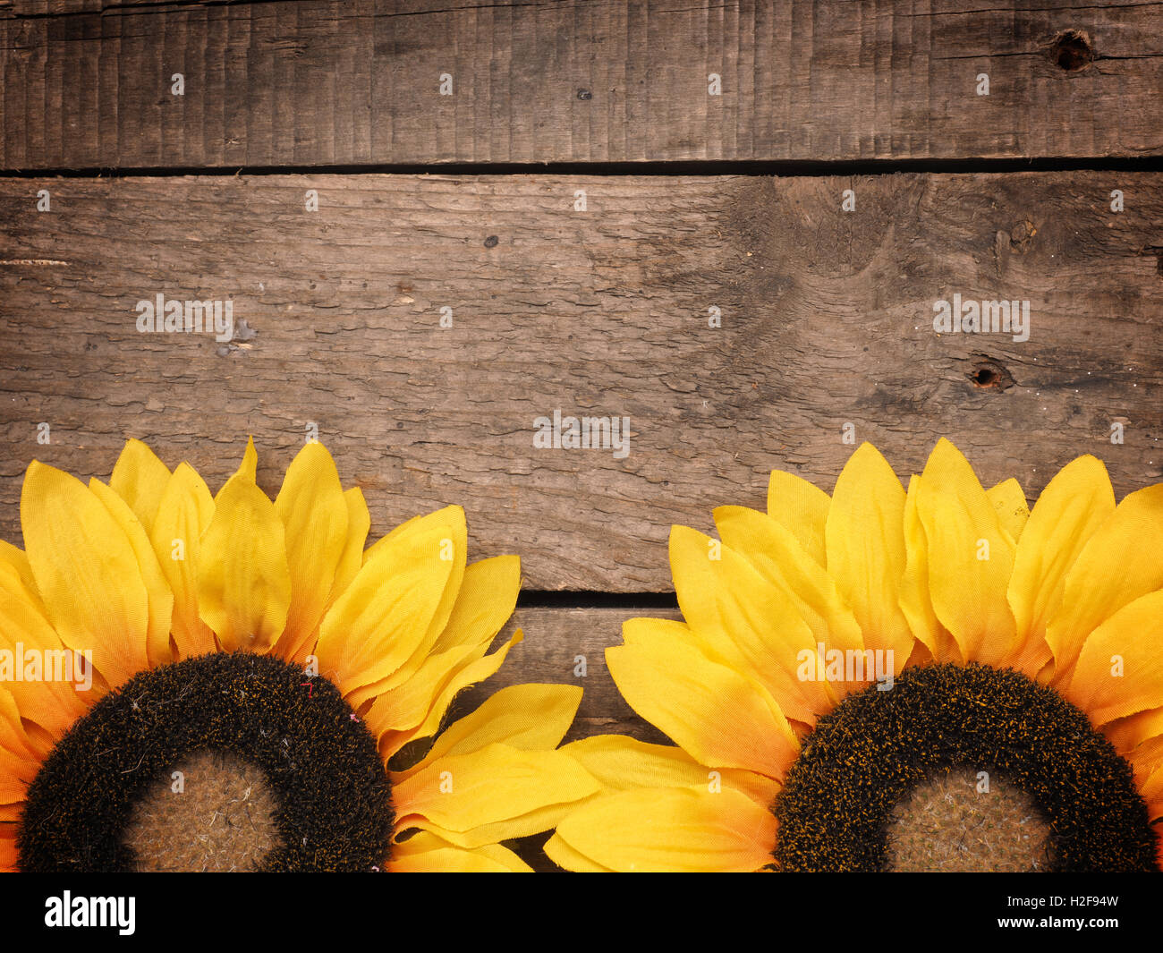 Two Sunflowers On An Old Rustic Wooden Background Autumn