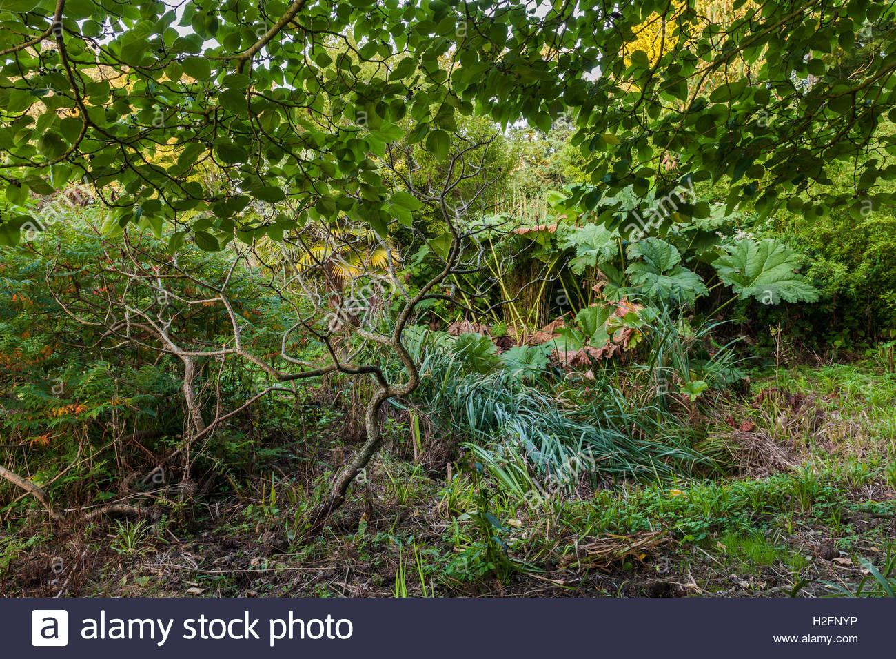 garden overgrown neglected - Stock Image