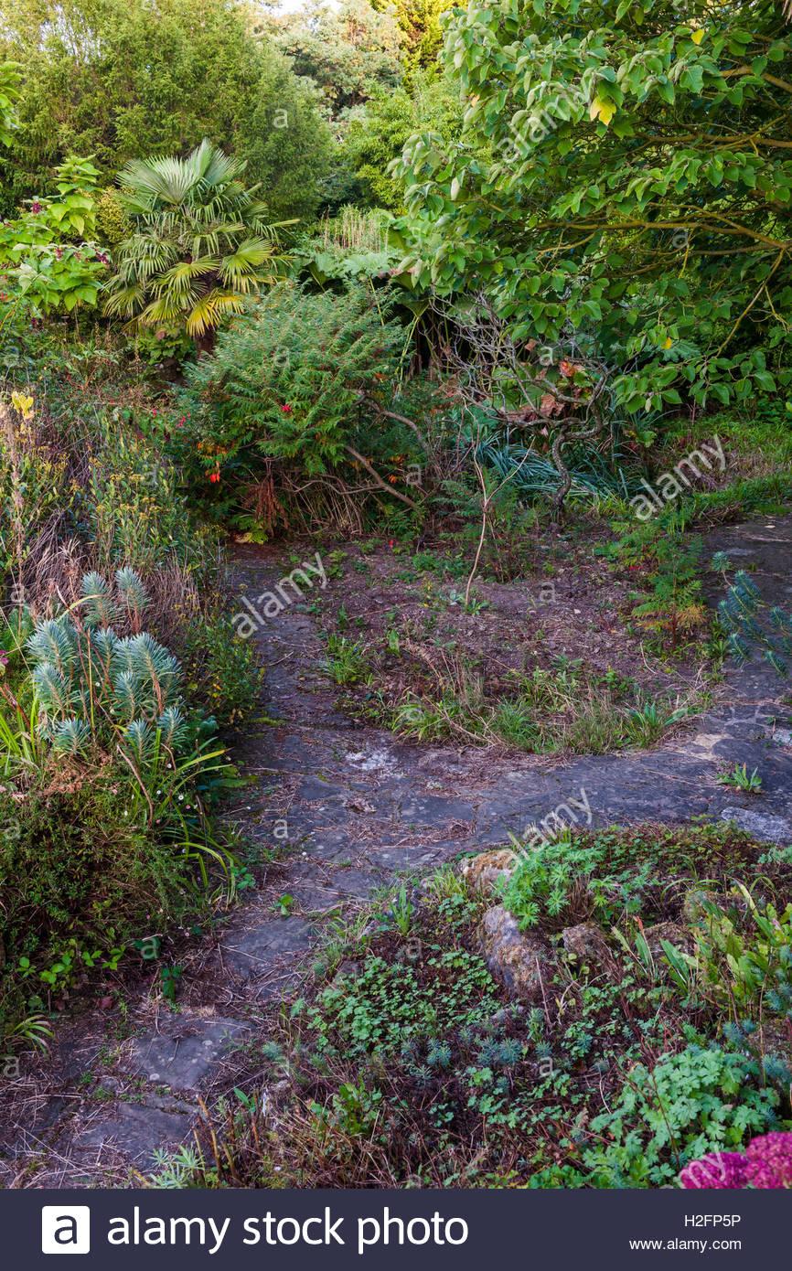 overgrown neglected garden - Stock Image