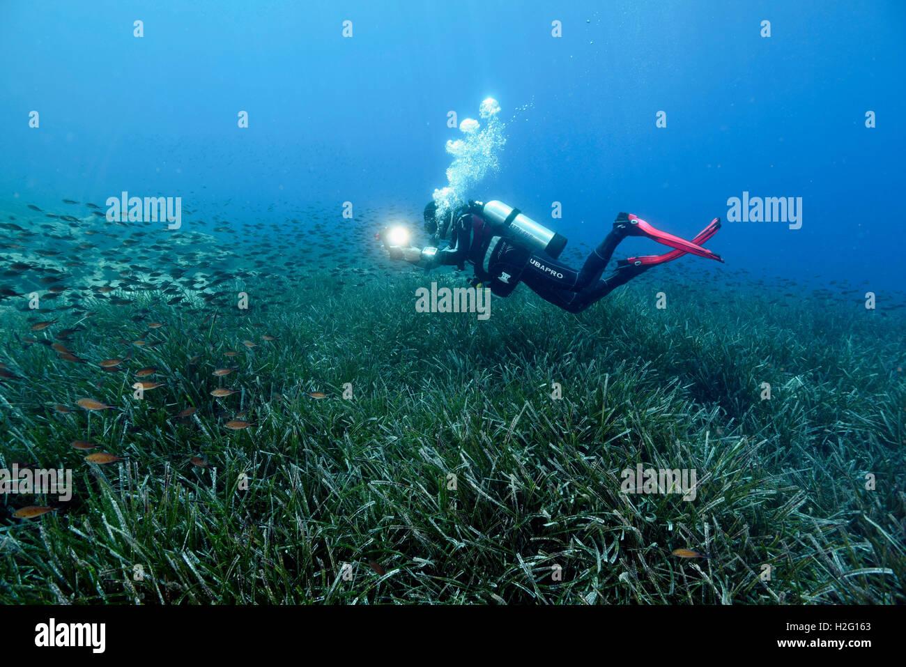 Neptune seagrass meadow, Posidonia oceanica, Bodrum Turkey - Stock Image