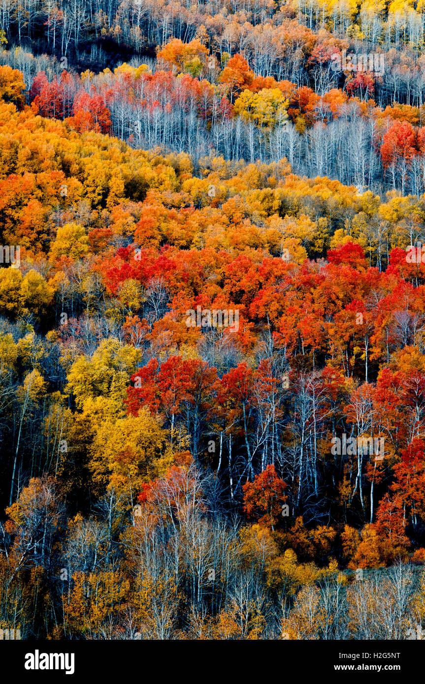 Autumn color in Little Blitzen Gorge, Steens Mountain, Oregon - Stock Image