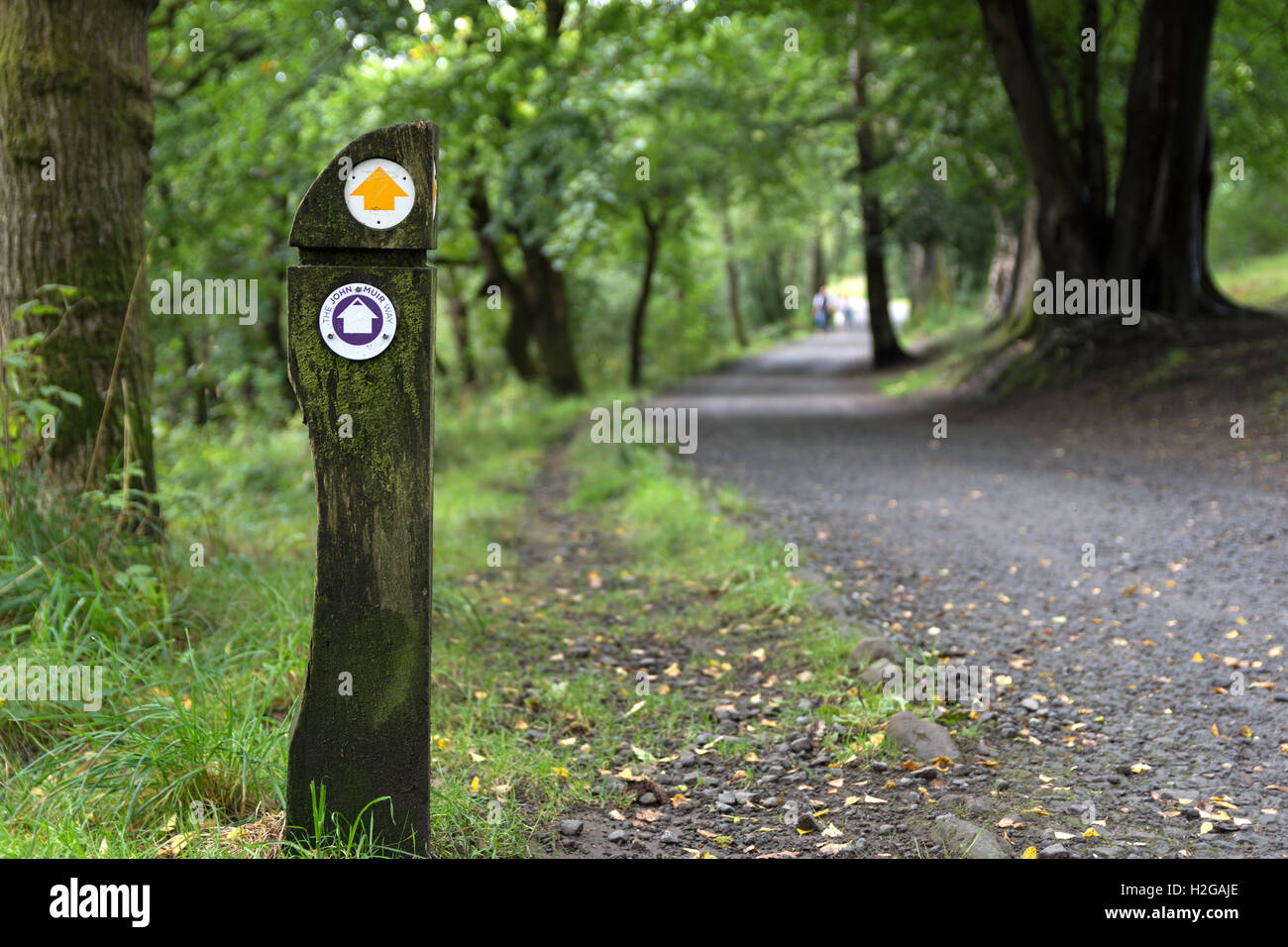 Nature walk balloch park - Stock Image