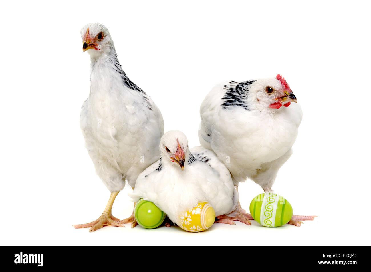 Chickens and easter eggs - Stock Image