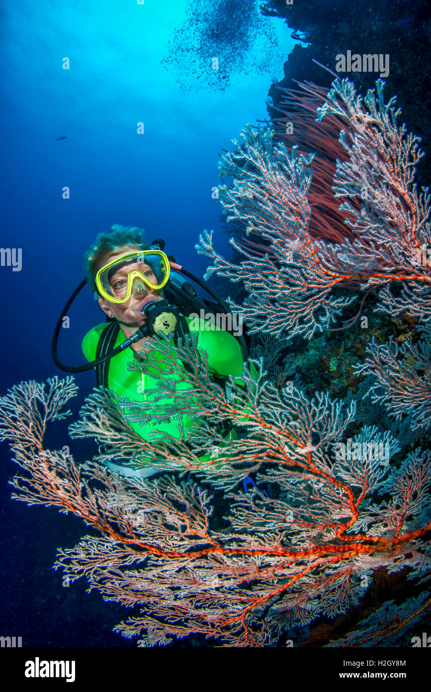 Blond female scuba diver explores coral reef in Pacific Ocean - Stock Image