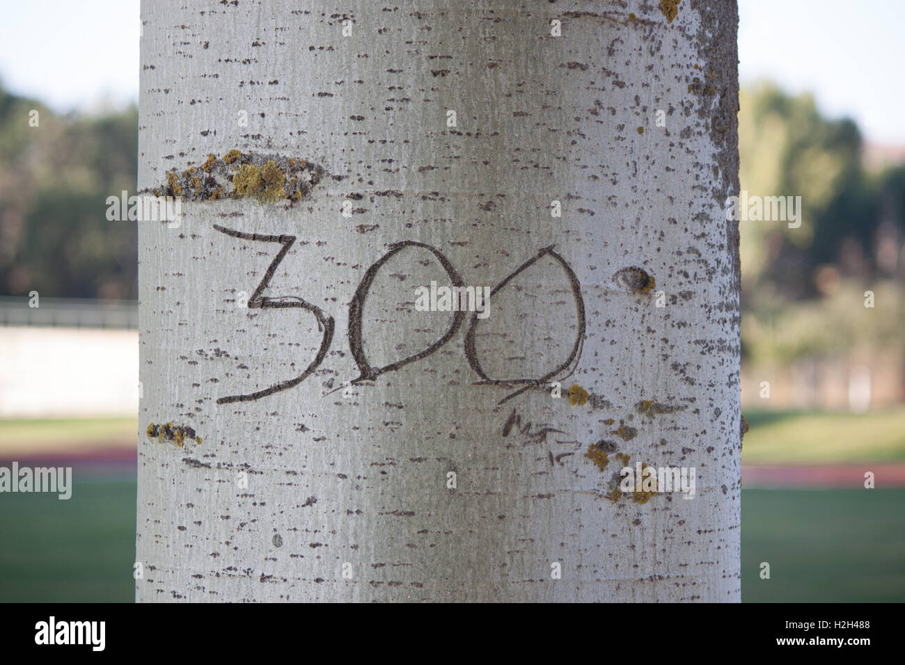 A tree with a '300'  mark Stock Photo