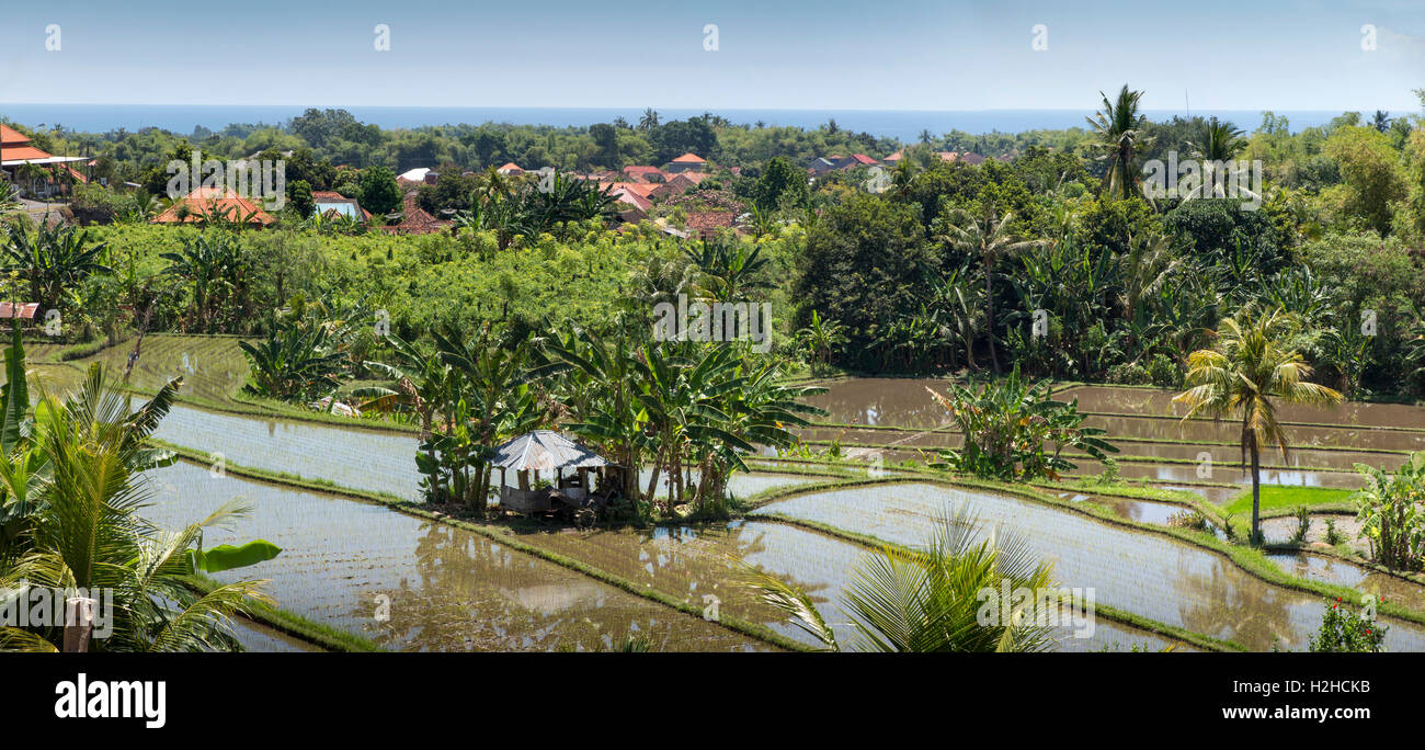 Indonesia, Bali, Lovina, northern coast terraced rice paddy fields at Banjar, panoramic - Stock Image
