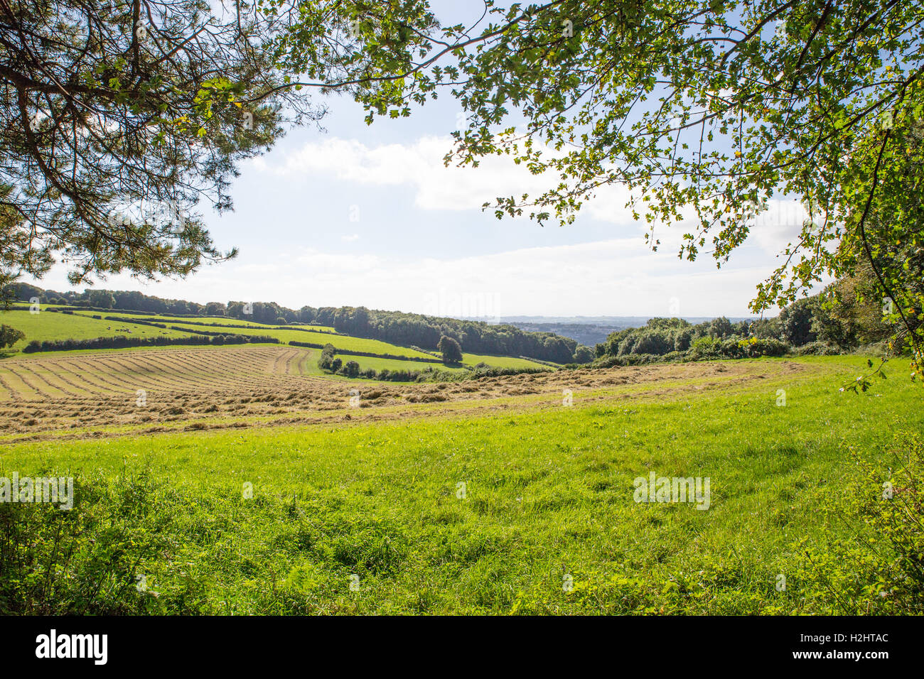 Making hay while the sun shines. Stock Photo