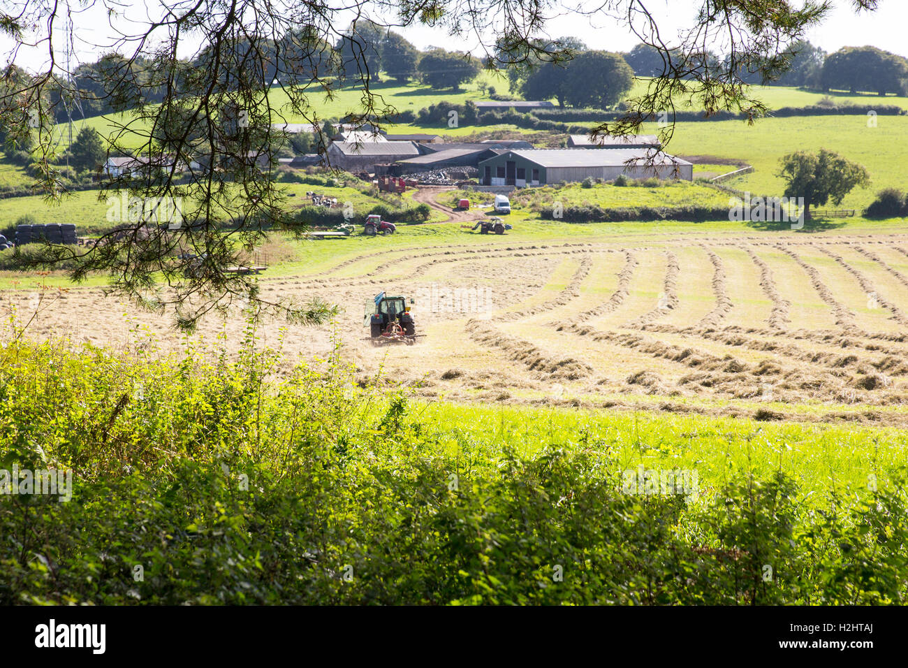 Making hay while the sun shines. - Stock Image